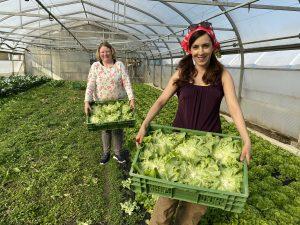 Das Land hilft: als Erntehelferin auf der Höri